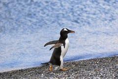 Идти пингвина Стоковое Фото