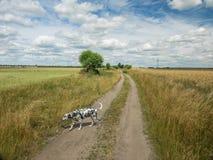 Идти собаки Стоковая Фотография RF