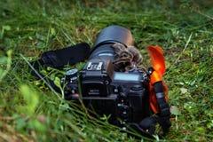 Идти тарантула на воздухе через камеру Стоковые Изображения RF