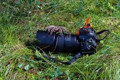 Идти тарантула на воздухе через камеру Стоковое фото RF