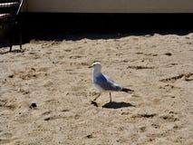 Идти чайки моря Стоковое Фото