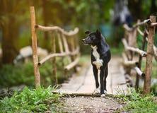 Идти черной собаки Стоковое фото RF