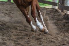 Идущая лошадь Стоковое Изображение RF