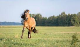 Идущая лошадь Стоковое Изображение