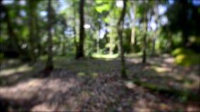 Идущее избежание прочь через лес страхом сток-видео