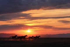 Идущие лошади Стоковое Изображение