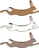 Идущий кролик Стоковые Изображения