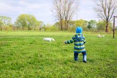 Идущий мальчик в gumboots на поле Стоковое Изображение RF