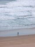 Идущ собака Стоковые Изображения