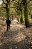Идущ через древесины на холме Tandle, Royton стоковое изображение rf