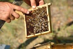 иллюстратор сота формы eps 8 дополнительный пчел Стоковое Изображение RF