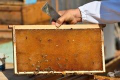 иллюстратор сота формы eps 8 дополнительный пчел Стоковые Изображения