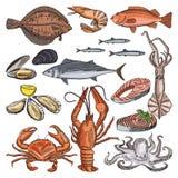 Иллюстрации пищевых продуктов продукта моря для изысканного меню Vector изображения кальмара, устрицы и различных рыб иллюстрация штока