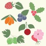 Иллюстрации ягод Стоковая Фотография RF