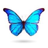 Иллюстрация абстрактного голубого †бабочки « Стоковые Фотографии RF