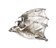 Иллюстрация акварели летучей мыши Стоковое Изображение RF