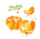 Иллюстрация акварели, который слезли мандарина иллюстрация штока