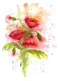 Иллюстрация акварели красного мака цветет на белой предпосылке Стоковое Изображение RF