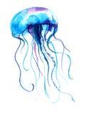 Иллюстрация акварели медуз Картина Медузы изолированная на белой предпосылке, красочном дизайне татуировки Стоковое Изображение