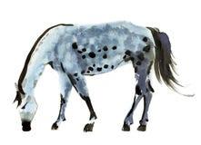 Иллюстрация акварели лошади иллюстрация штока