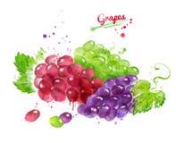 Иллюстрация акварели связок винограда иллюстрация штока