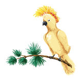 Иллюстрация ары вектора Желтый попугай сидя на ветви Стоковое фото RF