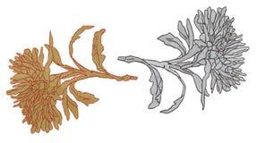 Иллюстрация астр цветка nouveau искусства Стоковая Фотография RF