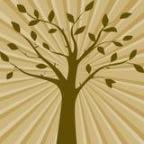 Иллюстрация вектора Брайна силуэта дерева Стоковое Изображение