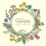 Иллюстрация вектора в форме круга Предпосылка трав, свежие листья и различные цветки Рамка с местом для вашего иллюстрация вектора