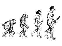 Иллюстрация вектора гравировки эволюции человека Стоковые Фотографии RF