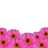 Иллюстрация вектора естественной предпосылки цветка Gerbera Стоковые Фотографии RF