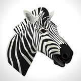 Иллюстрация вектора зебры Стоковая Фотография