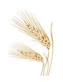 Иллюстрация вектора золотого шипа пшеницы стилизованная Стоковое Фото