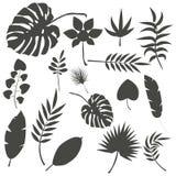 Иллюстрация вектора лист зеленого цвета джунглей тропического лета ладони листьев экзотическая Стоковые Фотографии RF