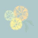Иллюстрация вектора оранжевых кусков с листьями Стоковое фото RF