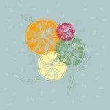 Иллюстрация вектора оранжевых кусков с листьями Стоковое Фото