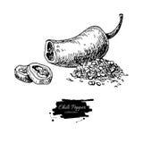 Иллюстрация вектора перца Chili нарисованная рукой Овощ выгравировал объект стиля иллюстрация вектора