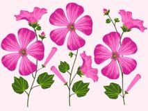 Иллюстрация вектора розовых цветков Стоковое Изображение RF