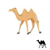 Иллюстрация вектора силуэта верблюда на белизне Стоковая Фотография