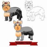 Иллюстрация вектора собаки йоркширского терьера Стоковое Изображение