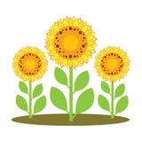 Иллюстрация вектора солнцецветов Стоковые Фото
