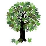 Иллюстрация вектора с деревом клена Стоковое фото RF