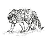 Иллюстрация вектора тигра черно-белая Стоковая Фотография