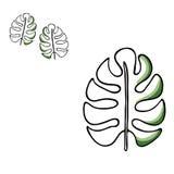 Иллюстрация вектора тропических лист Нарисованные рукой лист ладони определите изолированный элемент для украшения, моду Природа Стоковое Фото