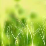 Иллюстрация вектора ушей пшеницы чертежа руки Стоковые Изображения RF