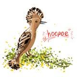 Иллюстрация вектора удода птица Рук-чертежа тропическая (ep Upupa Стоковое Фото