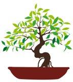 Иллюстрация вектора цветастого дерева бонзаев Стоковое фото RF