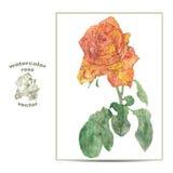 Иллюстрация вектора цветка розы Стоковые Изображения RF