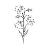 Иллюстрация вектора цветков колокола Стоковое Изображение