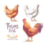 Иллюстрация вектора цыпленка бесплатная иллюстрация
